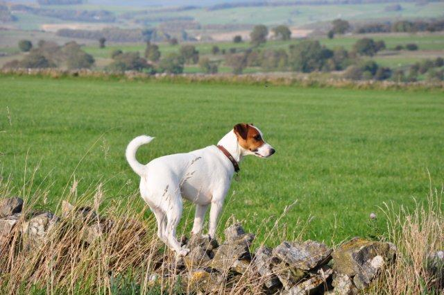 Dog Friendly Accommodation Peak District Cottages near Bakewell, Derbyshire