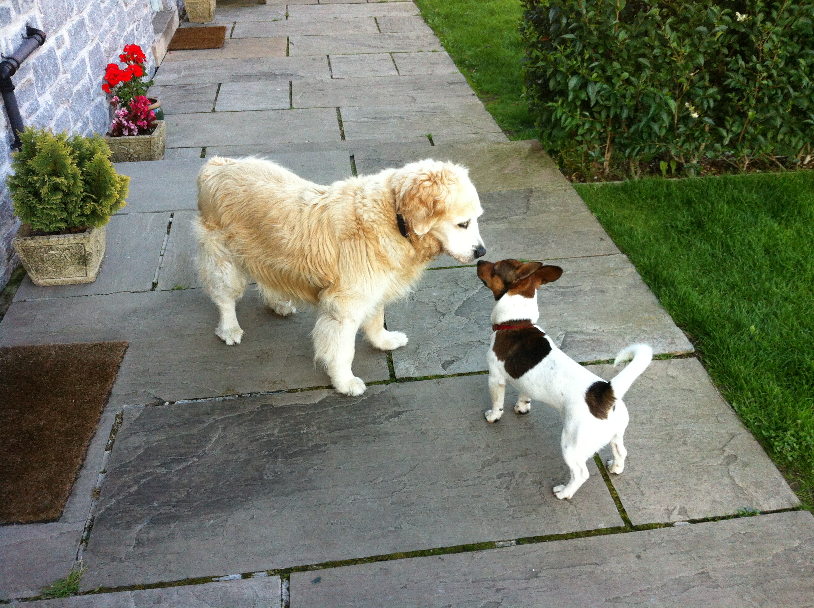 Two Dogs Greet each other at Endmoor Farm Holiday Cottages