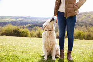 Pet friendly cottages in the Peak District luxury holiday cottages