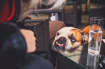 Best dog friendly pubs in the Peak District, The Packhorse Inn, Little Longstone