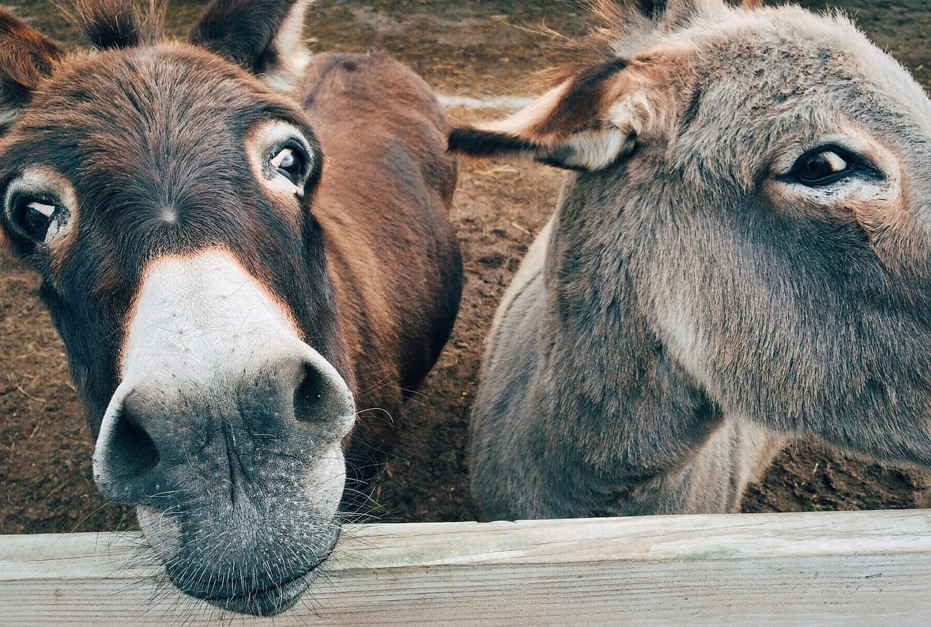 10 best places to visit in the Peak District Donkey Sanctuary