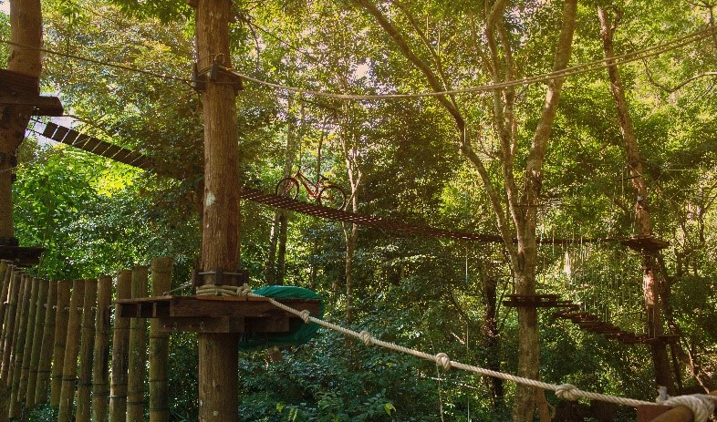 Places to treat your dad on Father's Day in the Peak District, Go Ape